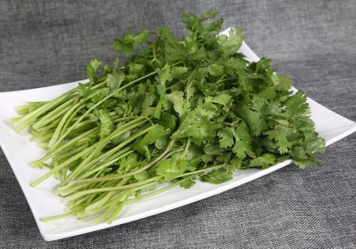 调味品之一的香菜最佳播种时间和高产种植技术详解!